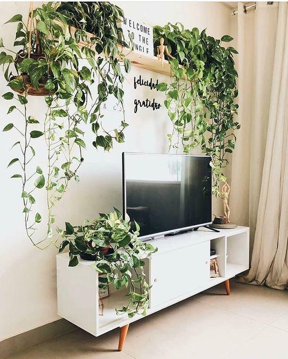 Sala de estar pequena, decorada de maneira simples com um rack de tv e uma estante em cima com plantas.