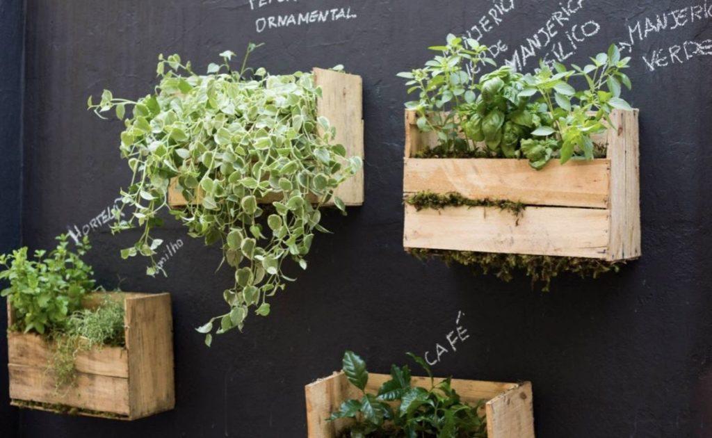 Horta suspensa feita com caixote de madeira.