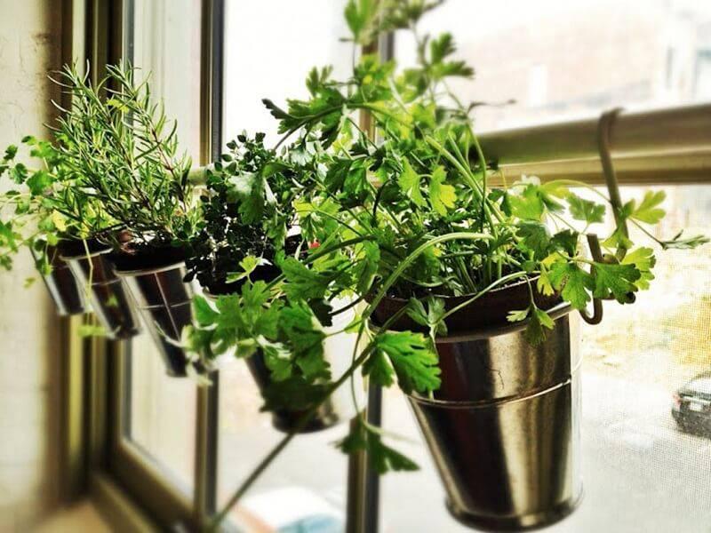 Plantas em vasos de ferro pendurados na parede.