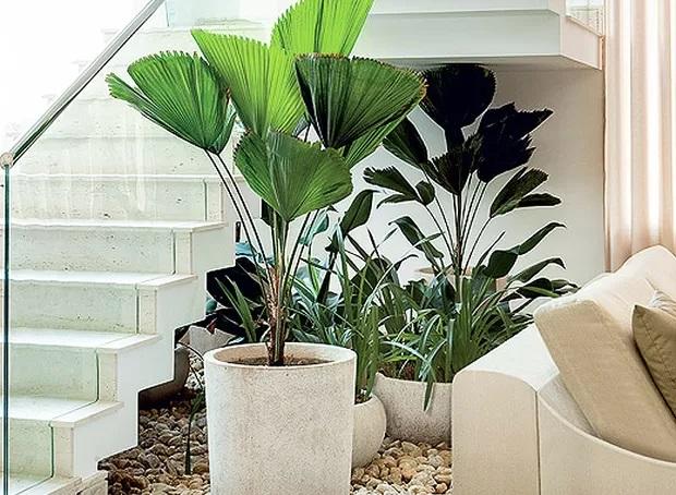 Jardins pequenos embaixo da escada.