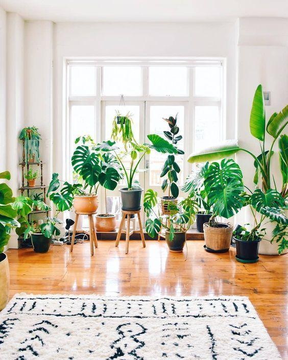 Plantas são ótimas aliadas na decoração de espaços pequenos.