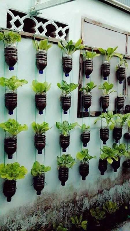 Parede de garrafas pet formando uma horta suspensa