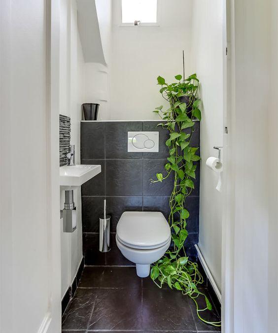 Vaso com planta que arrasta no chão em banheiro branco e cinza.