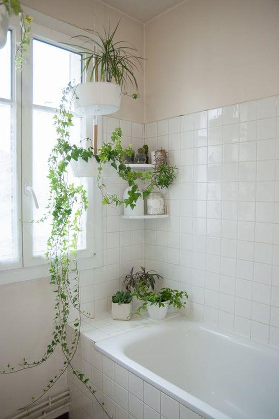 Borda da banheira com vários pequenos vasos de cactos e plantas suspensos e em prateleiras.