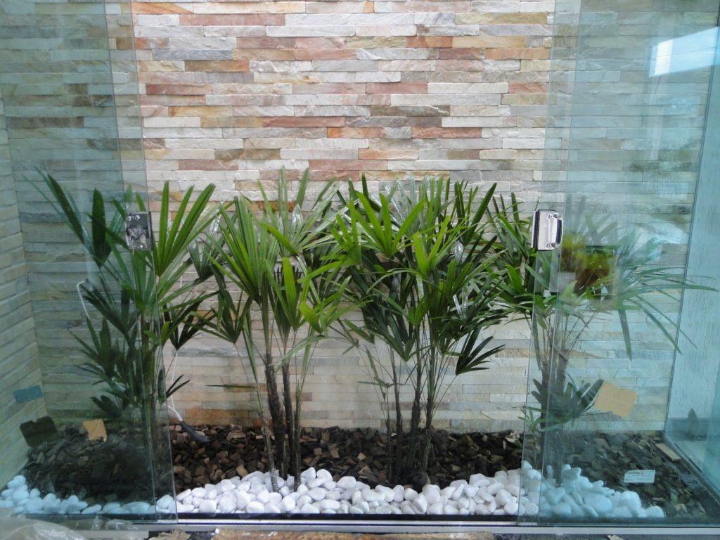 Abertura externa com palmeira-leque.