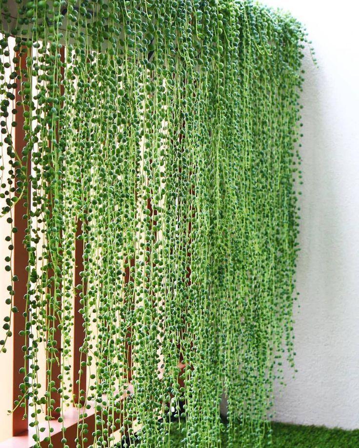 jardim suspenso com colar de pérolas