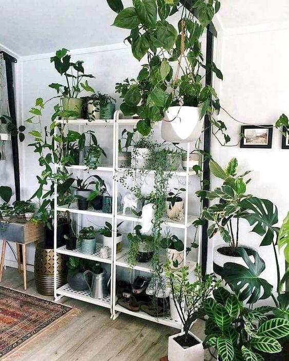 estante branca com plantas