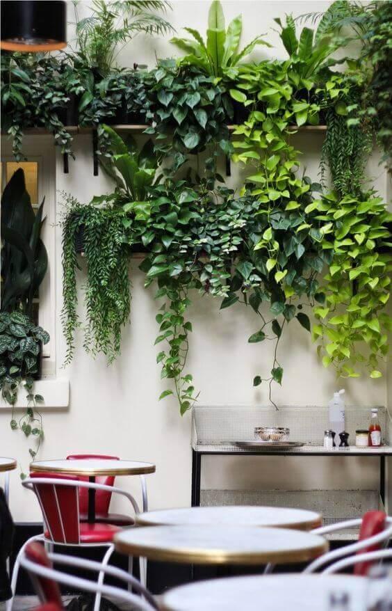 jardim vertical em prateleiras