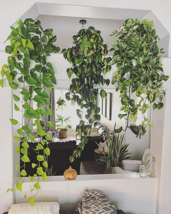 Plantas pendentes em cima de uma bancada de cozinha.