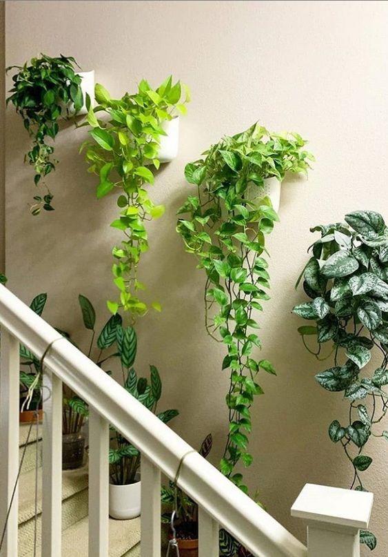Escada com plantas,