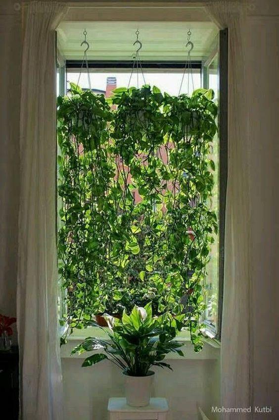 plantas suspensas em janela