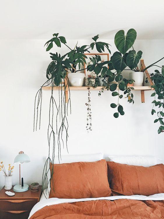 Prateleiras com plantas,