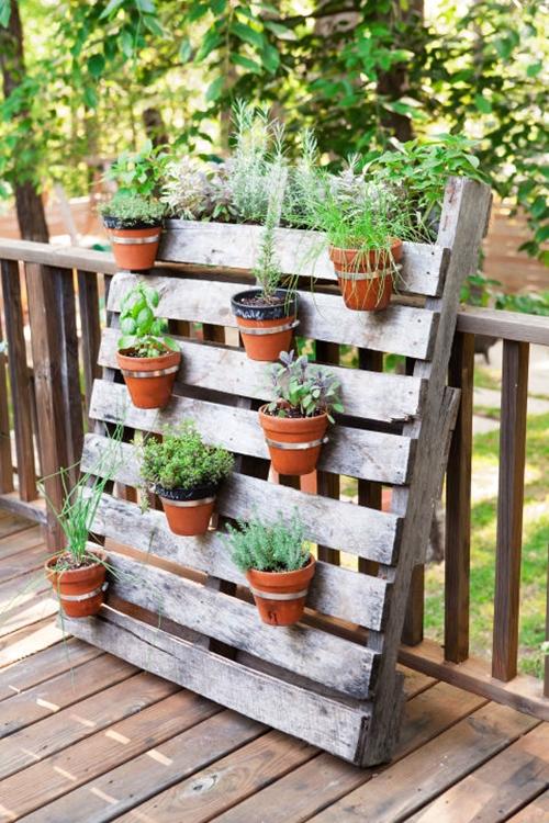 Palete com plantas.