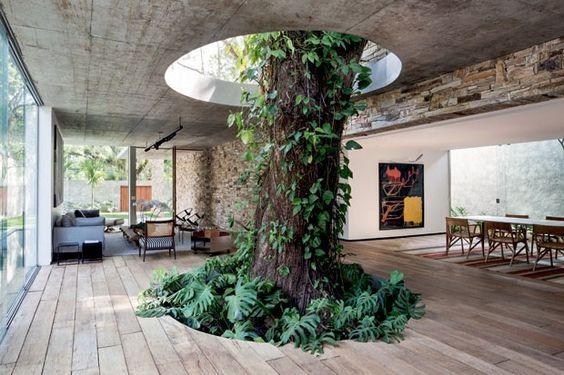 Casa construída ao redor de uma árvore.