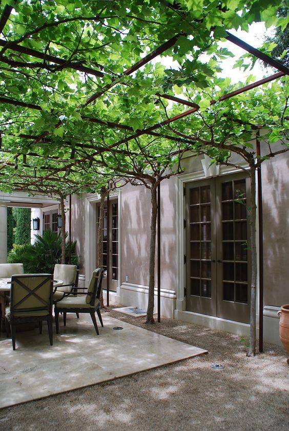 Área externa com mesa redonda, pergolados e plantas.