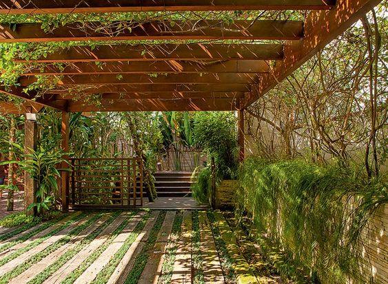Área externa com muitas plantas.