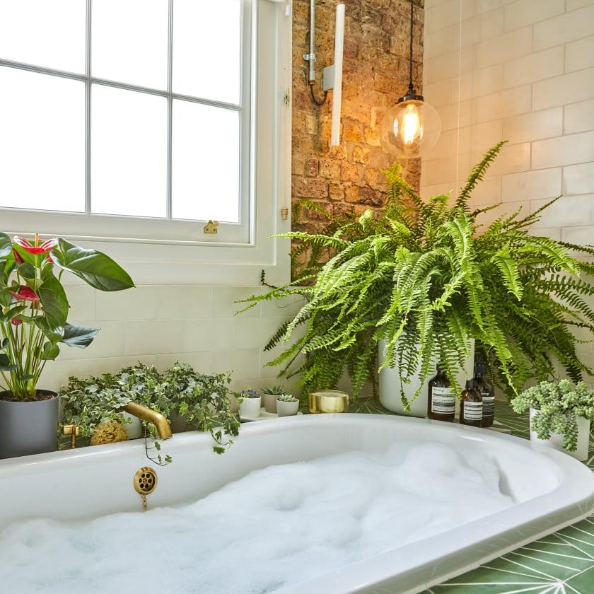 Banheiro com samambaia argentina.