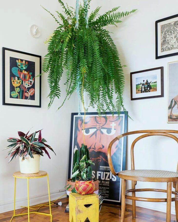 Decoração com quadros e plantas.