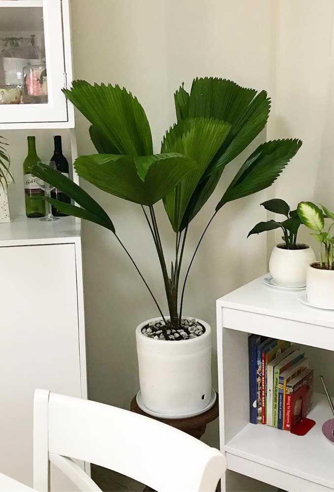 Decoração de sala com plantas.