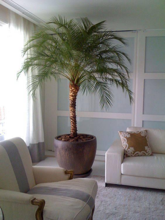 Sala com decoração clean e vasos de planta grande.