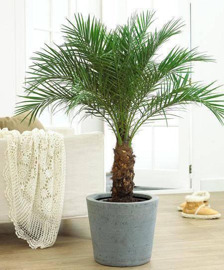 Sala com decoração simples e vaso de planta decorativo.