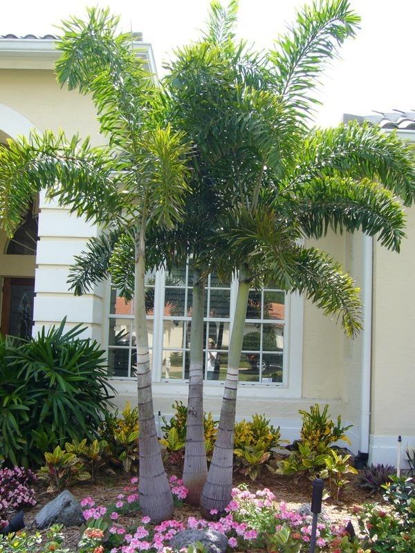 Jardim decorado com várias espécies de plantas e árvores.