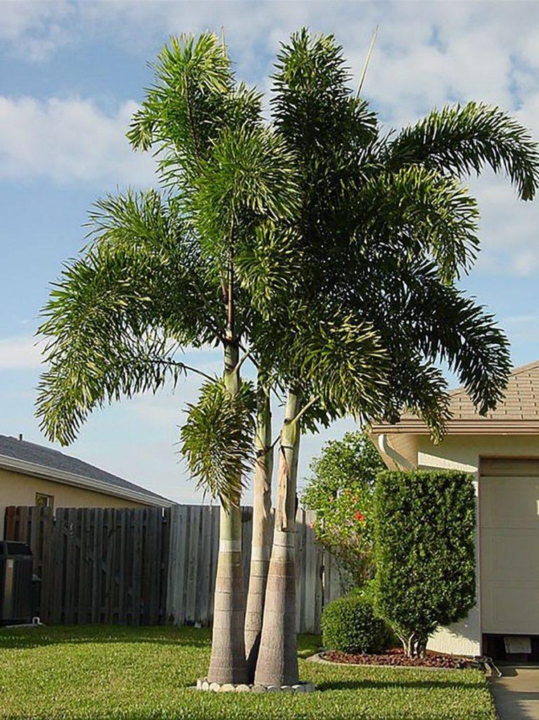 Plantas para área externa da casa.