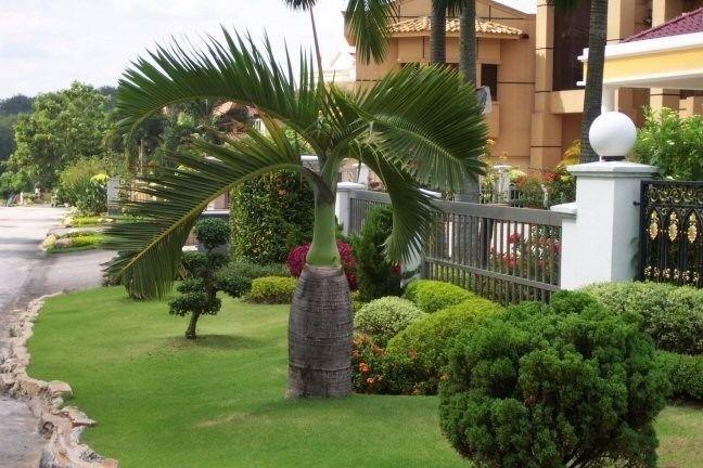 Jardim elegante com palmeira garrafa.