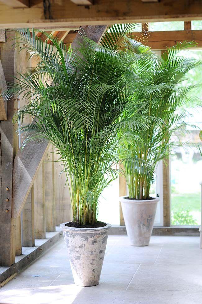 Varanda decorada com vaso de palmeira areca.