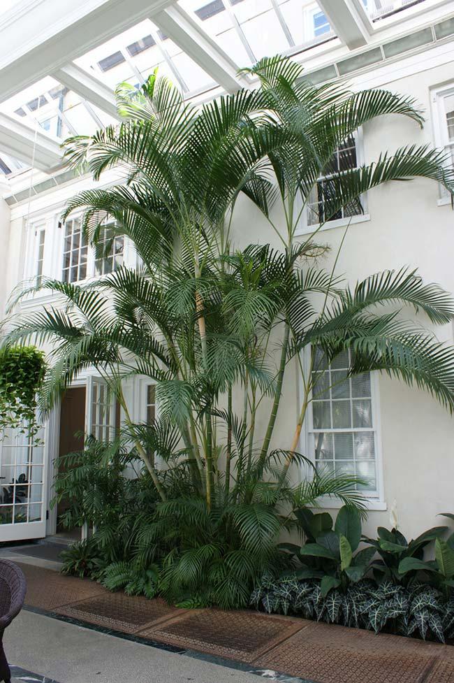 Jardim externo decorado com palmeiras areca.