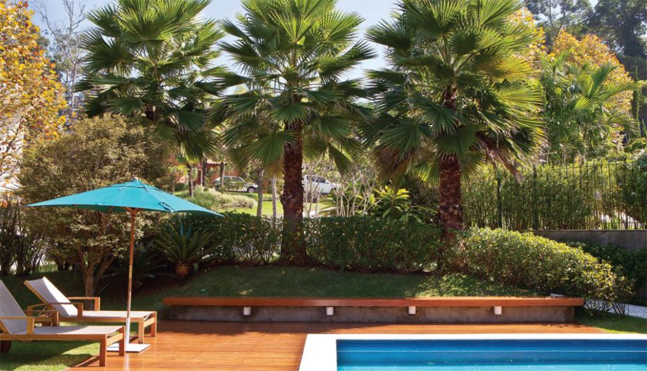 Palmeiras washingtonia ao redor da piscina.