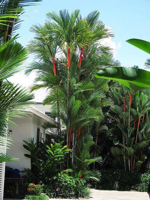 Casa grande decorada com palmeira laca.