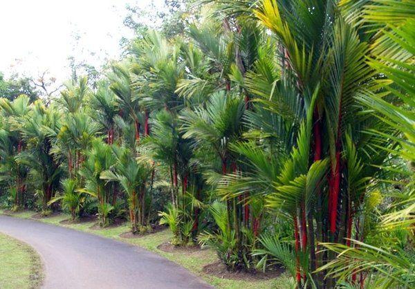 Estrada com palmeira laca.