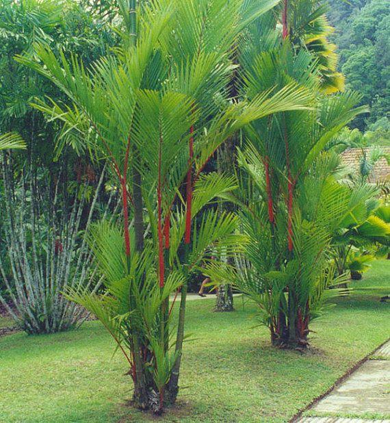 Jardim com vários tipos de palmeiras.