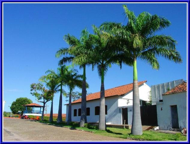 Fazenda com palmeira imperial.