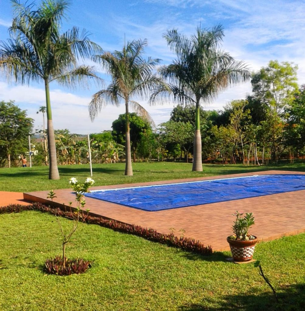 Palmeira imperial ao redor da piscina.