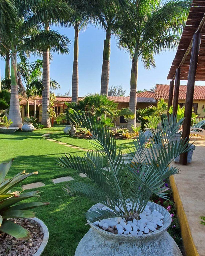 Área externa da casa com jardim composto por diferentes espécies de plantas.