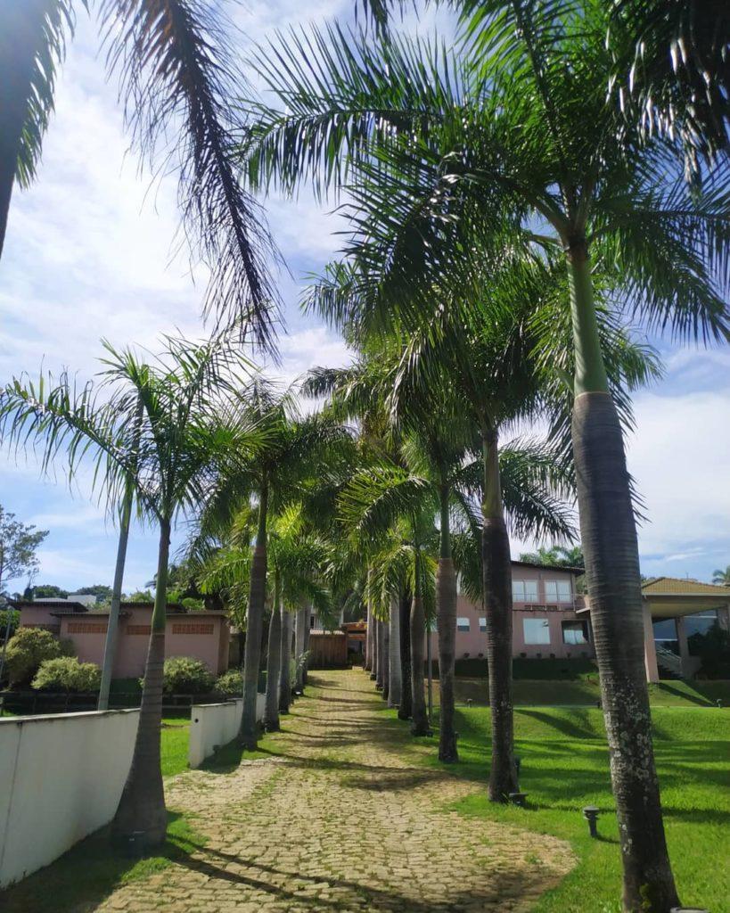 Entrada da casa com várias palmeiras imperiais.
