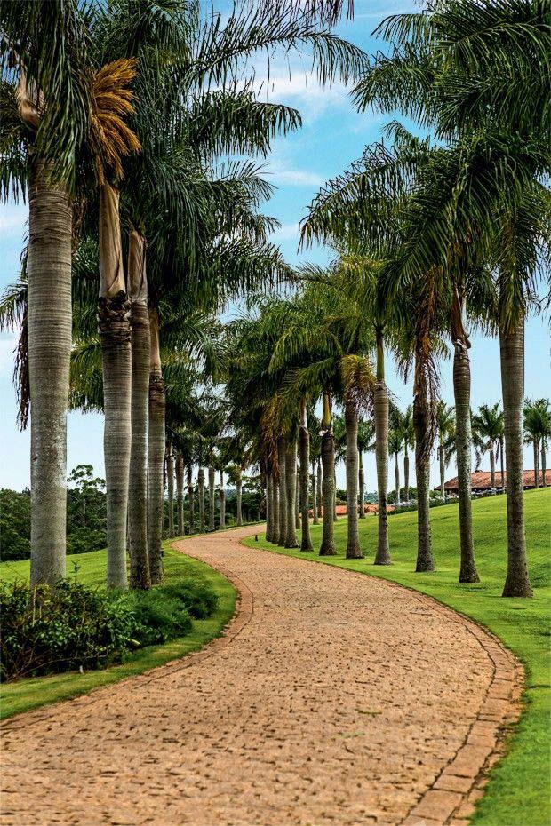 Entrada da casa com palmeira imperial.