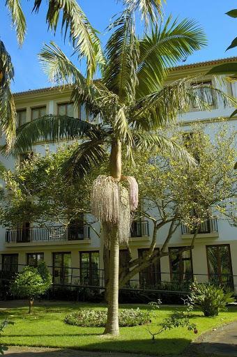 Jardim com palmeira real.