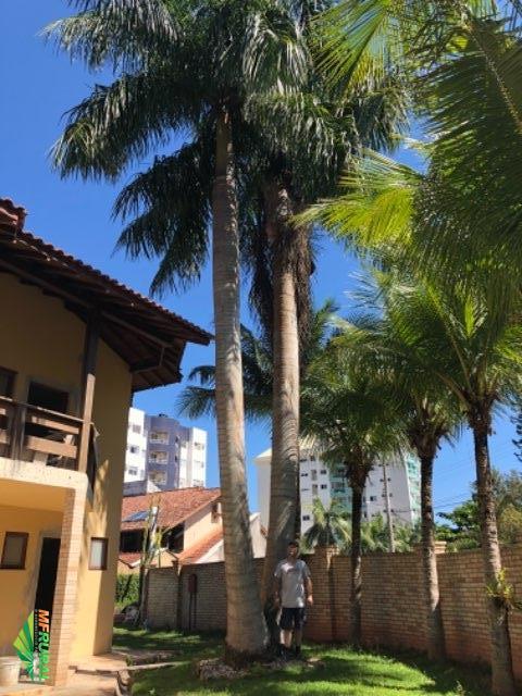 Casa com jardim de palmeira real.