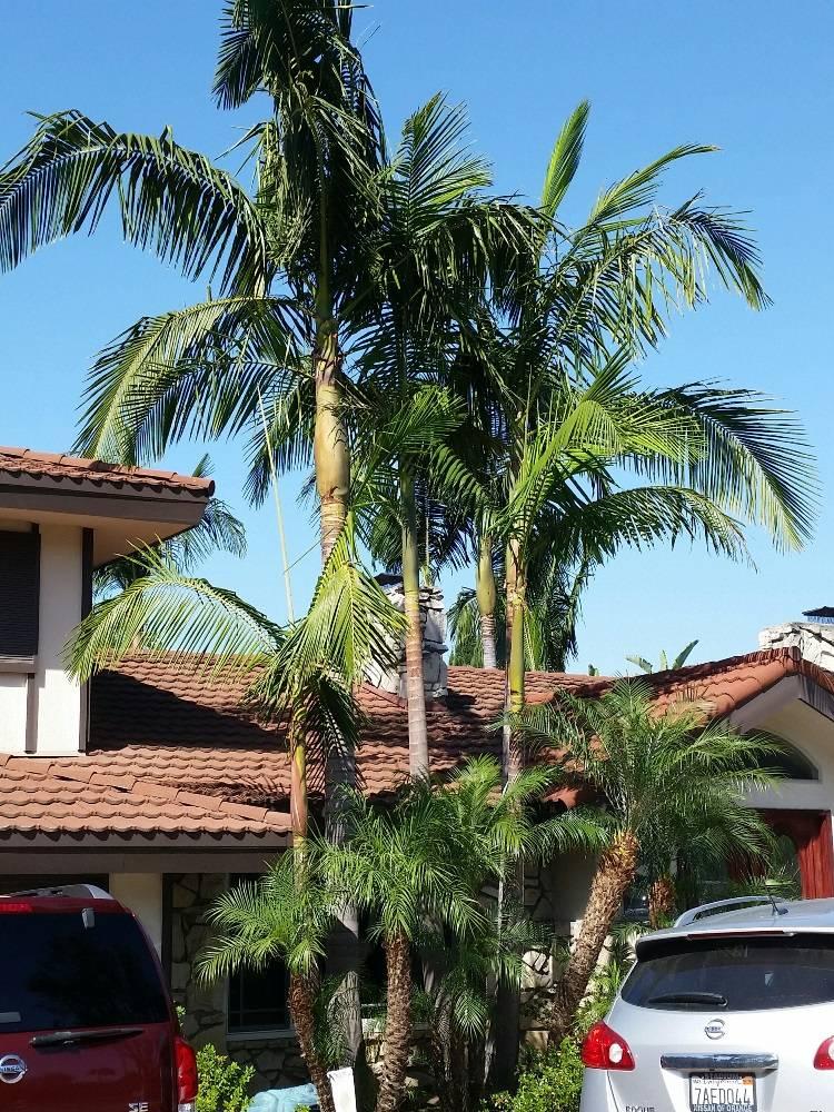 Entrada da casa com palmeira real.