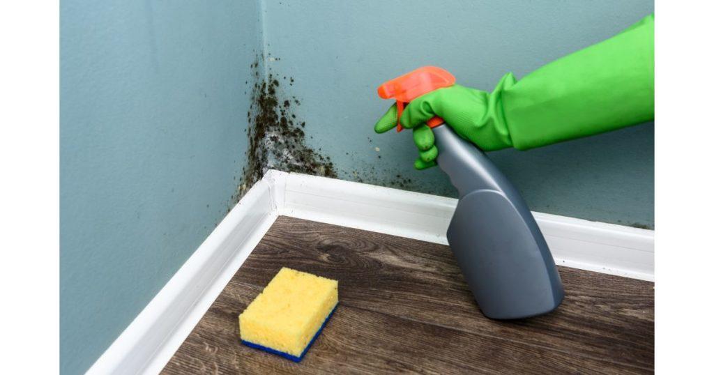 Canto da parede com mofo e pessoa borrifando produto para tirar.