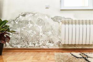 Como tirar mofo da parede