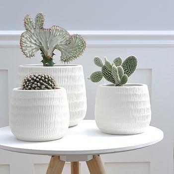 Mesinha de canto com vasos de plantas para dentro de casa.