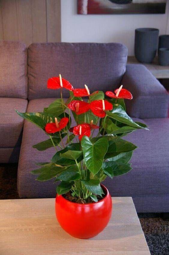 Vaso vermelho combinando com as flores.