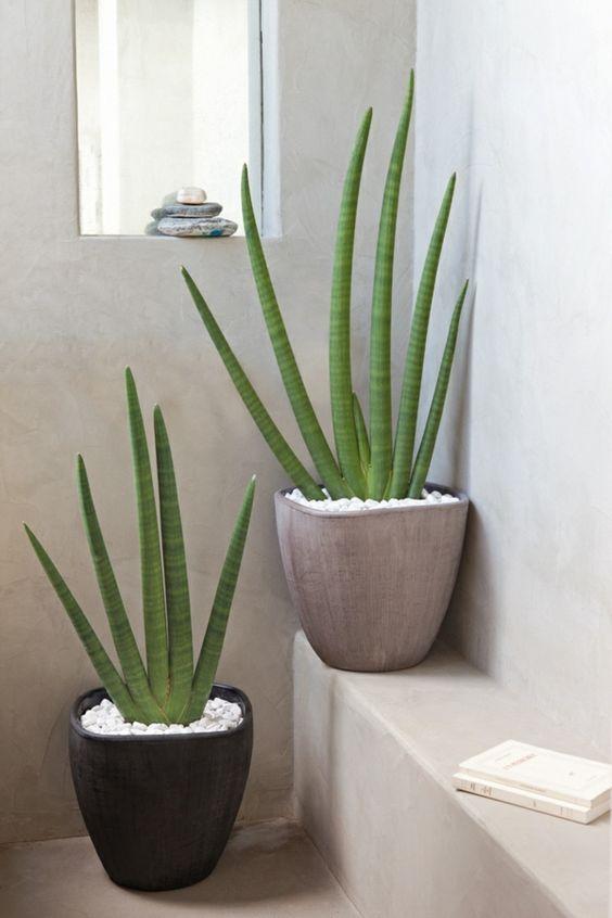 Banheiro com dois vasos de plantas para dentro de casa.