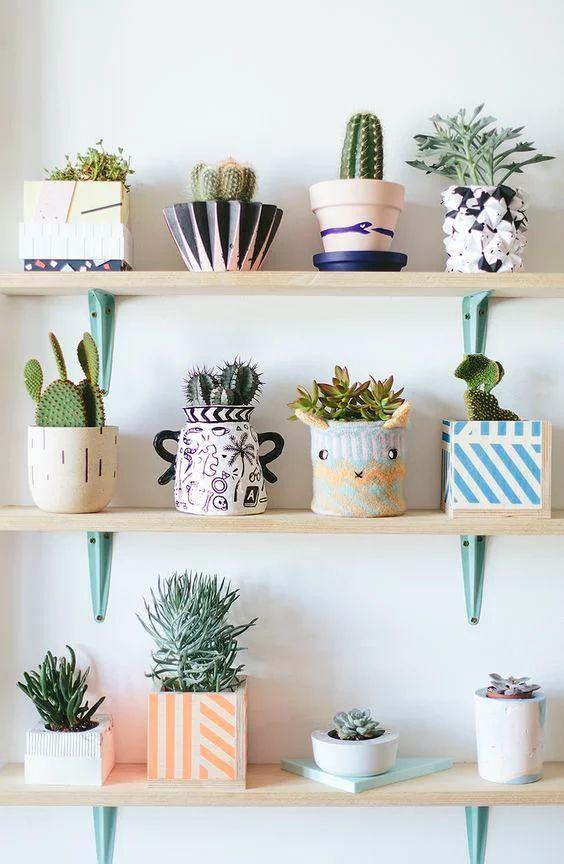 Prateleiras com várias espécies de plantas para dentro de casa.
