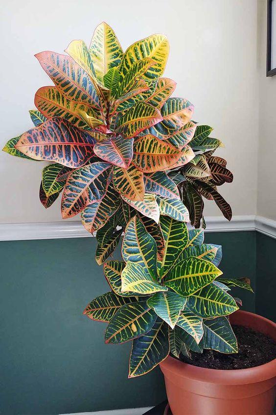 Vaso de plantas com folhas coloridas.