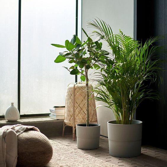 Dois vasos de plantas dentro do quarto.